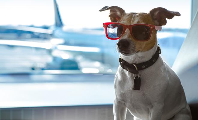 Viajes con mascotas: cómo hacer que tu perro no lo pase mal y consejos