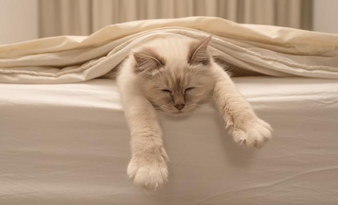 Dormir con tu gato, todo son beneficios