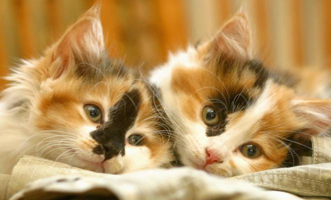 Cuándo se celebra el Día del Gato