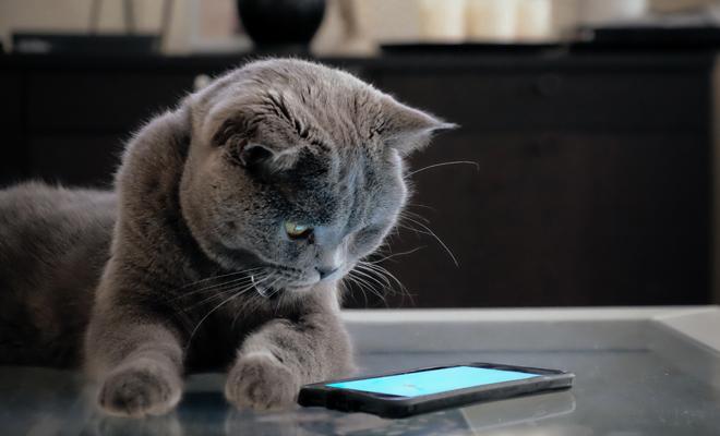 Motivos para celebrar el Día del Gato