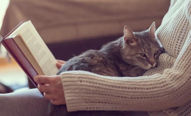 Cómo celebrar el Día del Gato