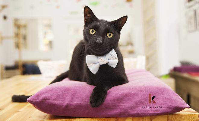 Consejos para hacer las fotos más divertidas y originales a tu gato