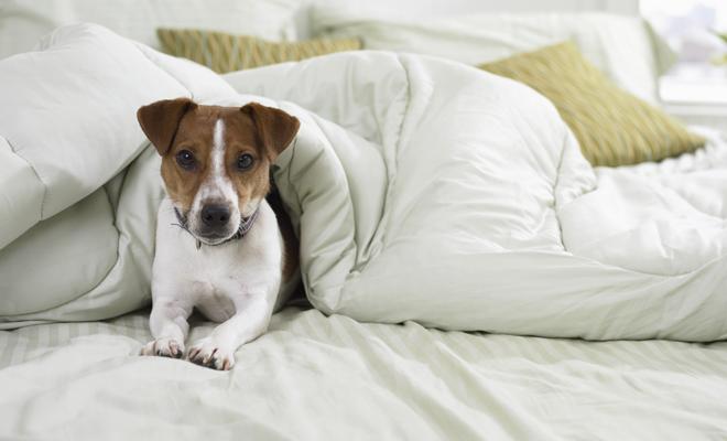 El mejor perro para un signo del zodiaco como Aries