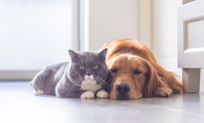 Gatos y perros según el Feng Shui
