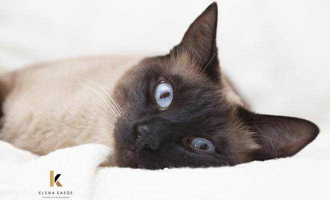 Fotografía a tu gato: Los mejores lugares para hacer fotos a tu mascota