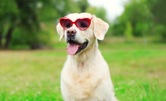 Cómo llamar a tu perro inspirado en San Valentín