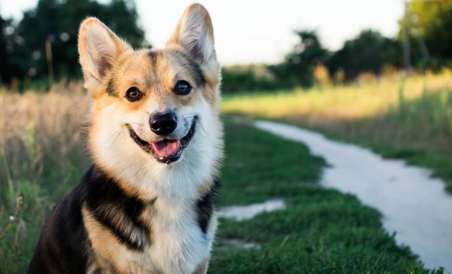Cómo llamar a un perro que tiene manchas