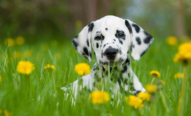 Estos son los mejores nombres para perros con manchas