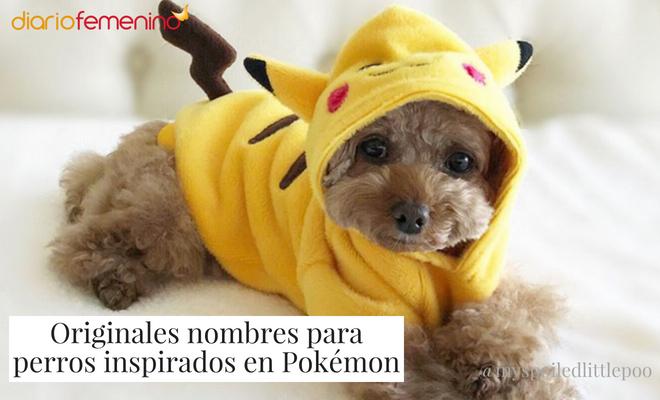 Bonitos nombres para perros sacados de Pokémon
