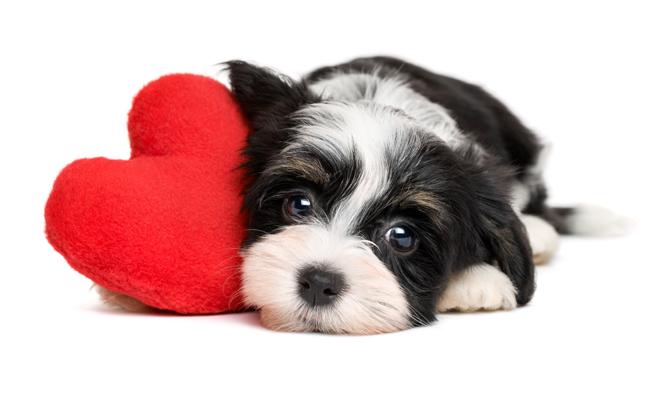 Ideas de nombres de perros para San Valentín
