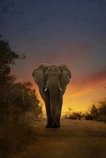 Significado de sou00f1ar con un elefante: aprovecha tu oportunidad en el ...