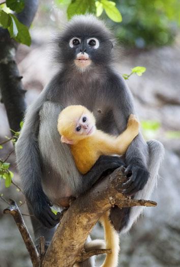 Significado De Soñar Con Monos Eres Una Persona Inteligente