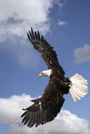 Soñar Con águilas Sigue Tu Instinto