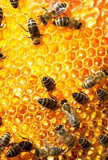 soñar con un panal de abejas: tus perspectivas laborales