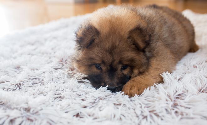 So ar con perros peque os - Casas para perros pequenos ...