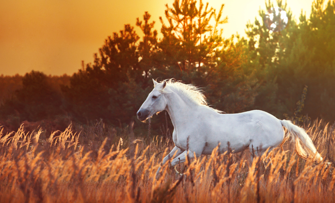Soñar con un caballo blanco: eres única y especial