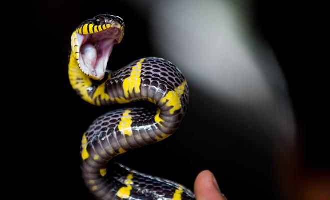 El Peligro De Soñar Que Una Serpiente Te Muerde