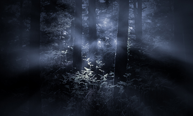 Los Diferentes Significados De Sonar Con Un Bosque Oscuro