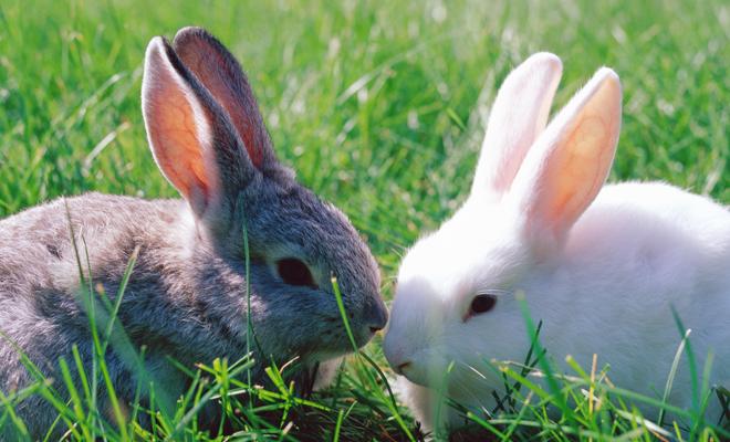 So ar con conejos de colores la buena suerte en tu vida - Bruguer colores para sonar ...