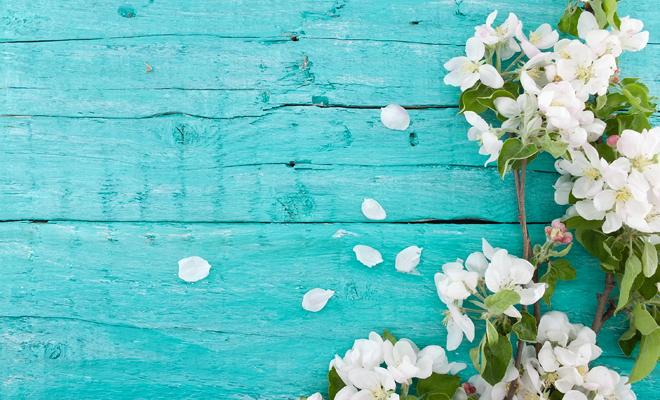 Diccionario de sueños: soñar con flores blancas