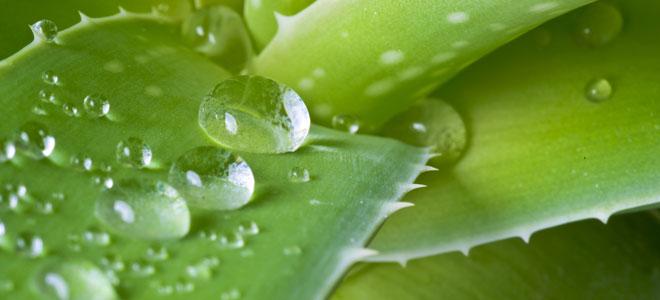 Hierbas y plantas medicinales para el dolor de est mago for Tipos de hierbas medicinales