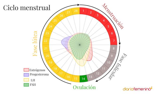 Estoy en que menstrual ciclo como del fase saber