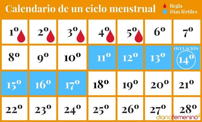 Dias Fertiles Mujer Calendario.Como Calcular Los Dias Fertiles De La Mujer