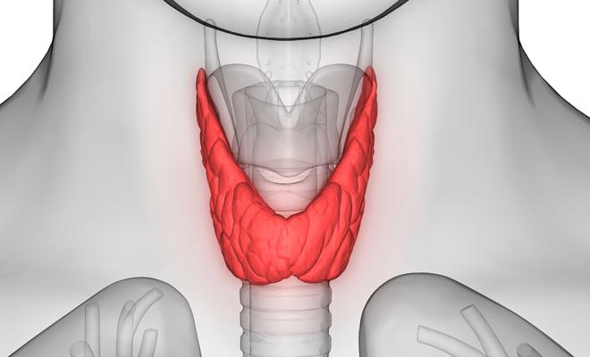 sintomas del hipertiroidismo en mujeres adultas